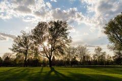 Bakbelysta träd på parkerar under solnedgång Royaltyfria Bilder