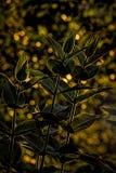 Bakbelysta växter royaltyfria foton