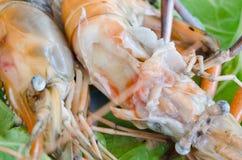 Bake shrimp Stock Photos
