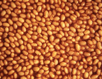 Baked beans background Stock Image