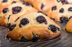 Baked berry muffins in a tray Royalty Free Stock Photos