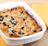 Baked Blueberry Cobbler. Blueberry cobbler in a baking dish cooling on a wire rack royalty free stock image