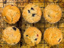 Baked Blueberry and Cranberry Muffins Royalty Free Stock Images