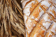 Baked bread and ears of wheat. Royalty Free Stock Photo