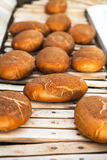 Baked Breads on the production line at the bakery Royalty Free Stock Photos