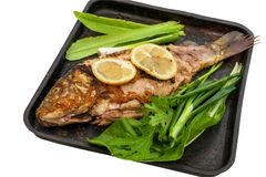 Baked carp marinated in lemon and spices with green leaf lettuce on a metal plate. Isolated on a white background. Stock Images