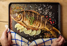 Baked carp with spices Royalty Free Stock Images