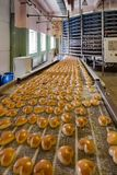 Baked cookies on conveyor belt. Automated cookies and cakes bakery production line stock images