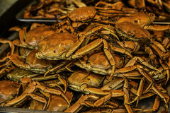 Baked crab Stock Images