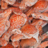 Baked crab Royalty Free Stock Images