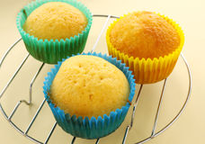 Baked Cup Cakes Royalty Free Stock Image