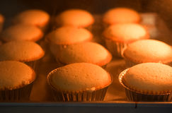 Baked cup cakes on a tray in the oven Royalty Free Stock Photos