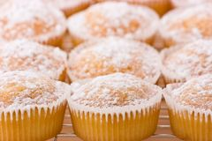 Baked cupcakes with dusting of icing sugar on top. Stock Photography
