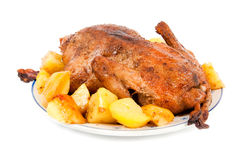 Baked duck Royalty Free Stock Photo
