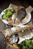 Baked fish Stock Image