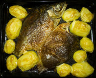 Baked fish with potatoes Royalty Free Stock Photos