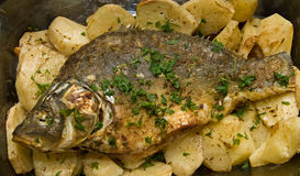 Baked fish and potatoes Royalty Free Stock Photo