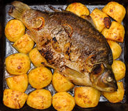 Baked fish with potatoes Stock Photos