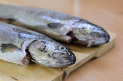 Baked fish Rainbow Trout Stuffed on a Cutting board Stock Photos