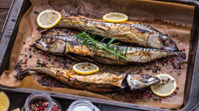 Baked Fish on a Roaster Pan. Baked Whole Fish with Spice, Lemon and Rosemary on a Roaster Pan with Baking Paper stock images
