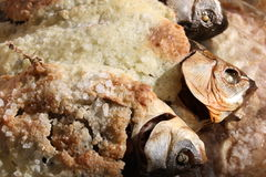 Baked fish in salt crust Stock Images