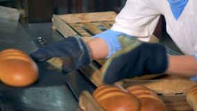 Baked golden baked loaves of bread are being put from the conveyor to pallets. 4K stock video
