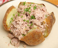 Baked or Jacket Potato with Tuna Mayonnaise Royalty Free Stock Photo