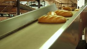 Baked loaf of bread in the bakery. Bread bakery food factory production with fresh products. Baked loaf of bread in the bakery, just out of the oven with a nice stock video