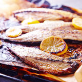 Baked mackarel on dripping pan with lemons Royalty Free Stock Image