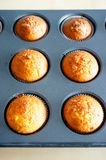Baked muffins Royalty Free Stock Image