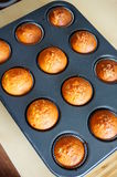 Baked muffins Stock Images