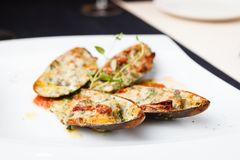 Baked mussels with parmigiano. Cheese and white wine in tomato coolie Stock Photography