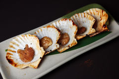 Baked opened scallops Royalty Free Stock Images