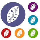 Baked pastry icons set. In flat circle reb, blue and green color for web Stock Images