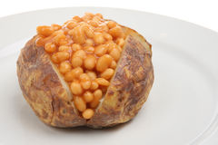 Baked Potato and Beans. Jacket potato stuffed with baked beans in tomato sauce Stock Image