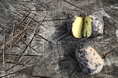 Baked potatoes in the campaign. Potatoes baked on coals in the campaign on a wooden board, camp food, closeup Stock Photos