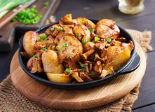 Baked potatoes with garlic, herbs and fried chanterelles. In a cast iron skillet royalty free stock photo