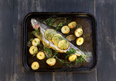 Baked Rainbow Trout. Delicious baked rainbow trout straight from the oven with potato, lemon and herbs royalty free stock photos