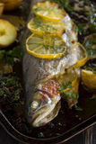 Baked Rainbow Trout Royalty Free Stock Image