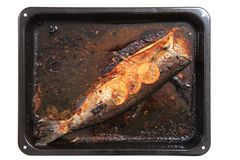 Baked salmon fish Stock Photography