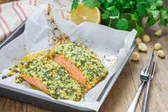 Baked salmon with macadamia-cilantro crust Stock Image