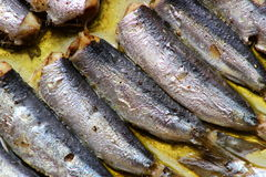 Baked sardines Stock Photography