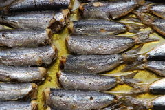 Baked sardines Royalty Free Stock Photography