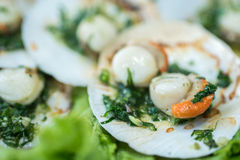 Baked scallops with butter Stock Photos