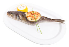 Baked sea bass with seafood and cheese. Royalty Free Stock Photos