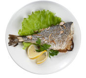 Baked Sea Bream Royalty Free Stock Image