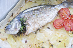 Baked Sea Bream Royalty Free Stock Images