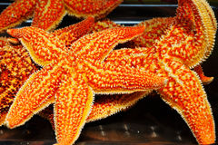 Baked sea star Royalty Free Stock Images