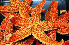 Baked sea star Stock Photography