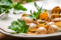 Baked snails with garlic butter Royalty Free Stock Photography